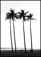 Beach Palm Trees Poster