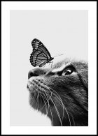 Cat and Butterfly Poster