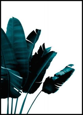 Green banana leaves Poster