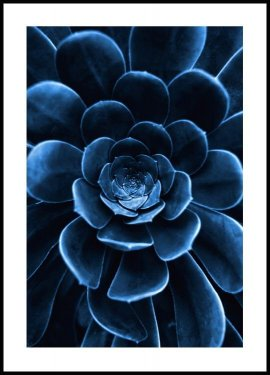 Blue flower cactus Poster