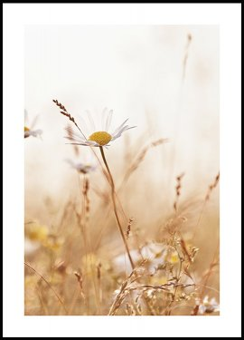 Flower in a Meadow Poster