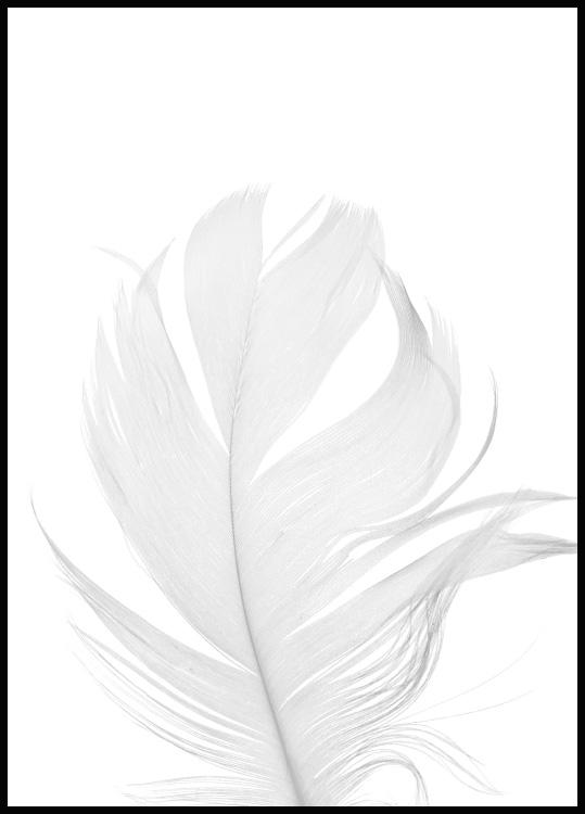 White Feather Poster